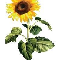 Kas ką augina?