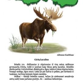 Jonas Ambrukaitis. Gyvūnų pasaulis